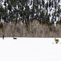 Dogs are welcome on the Durrance Loop.- Durrance Loop Fat Bike
