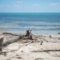 The beach has some dead wood and stones.- Virginia Key Beach Park