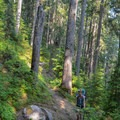 Traversing through the woods on a heavily rooted trail. While not long, this trail undulates a great deal and is a challenge for newer backpackers. - Vantage Peak
