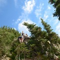 Climbing up the thick Krumholtz trees. - Vantage Peak