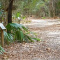 Portions of the Sugar Mill Nature Trail have interpretive signs providing information on flora along the path.- Sugar Mill Nature Trail