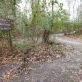 At a quarter mile into the trail, a sign marks where the Nature Trail splits from the Bayou Cane Trail. - Sugar Mill Nature Trail