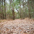 The trail follows a scenic and easy walking path.- Sugar Mill Nature Trail