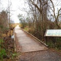 Alligator Marsh Boardwalk heads into the wetland marsh, where hikers may be able to observe birds, waterfowl, alligators and nutria amidst the wetlands.- Sugar Mill Nature Trail