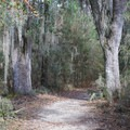 Spanish moss hangs from the trees along the final portion of the hike.- Sugar Mill Nature Trail