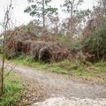 A spur heads to Alligator Marsh Boardwalk, which is built for wildlife viewing.- Sugar Mill Nature Trail