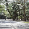 Spanish moss hanging from live oaks adds to the scenic ambience of the park.- Fontainebleau State Park