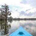 Paddling out on the still Lake Martin surface. Cypress trees line the lakeshore.- Lake Martin Paddling