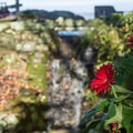 Flowers and a water feature near the turtle pond.- Blowing Rock
