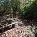 Each site has a picnic table, fire ring, and lantern post.- Mount Pisgah Campground