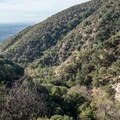 The Mount Wilson Trial cutting across the hillside.- Mount Wilson via Mount Wilson Trail