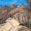 The summit area that was burned in 2017.- Mount Wilson via Mount Wilson Trail