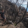 Walking though the area that burned near the Mount Wilson summit in 2017.- Mount Wilson via Mount Wilson Trail