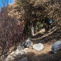 The Mount Wilson Trail.- Mount Wilson via Mount Wilson Trail