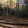 Backcountry campsite along the trail in the national forest.- Rainbow Falls + Turtleback Falls