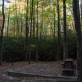 Early light in the forest.- Raymond Fisher Campsites