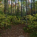 Sites are tucked away in the woods.- Raymond Fisher Campsites