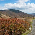 Appalachian Trail meandering along the top of the balds.- Roan Highlands: Carver's Gap to Grassy Ridge