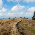 Along the top of Grassy Ridge Bald.- Roan Highlands: Carver's Gap to Grassy Ridge