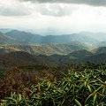 View over the rhododendrons on top of Grassy Ridge.- Roan Highlands: Carver's Gap to Grassy Ridge