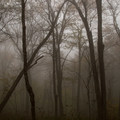 Foggy morning in the forest.- Max Patch