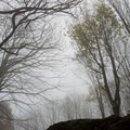 Ghostly trees on a cold morning.- Max Patch