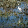 One of the many bird species you may spot at Poverty Point State Park. - Poverty Point Reservoir State Park