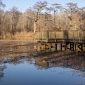 A dock sits above Rainey Lake. - Tensas River National Wildlife Refuge