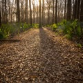 Rainey Lake Trail.- Tensas River National Wildlife Refuge