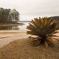 The South Toledo State Park beach found near the campground. - South Toledo Bend State Park Campground