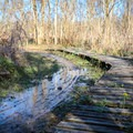 A plank bridge bypassing the saturated main trail.- Bonnet Carre Spillway