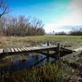 A plank bridge crosses a wet area.- Bonnet Carre Spillway