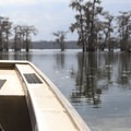 A large 17-person boat carries guests into Lake Martin.- Champagne's Cajun Swamp Tours