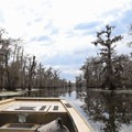 The boat tours are a unique way to experience the Louisiana swamps and bayous.- Champagne's Cajun Swamp Tours