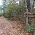 Very quickly onto the trail, a sign marks where the Stagecoach Trail leaves the Longleaf Pine Trail and heads left.- Stagecoach Trail