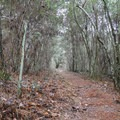 Stagecoach Trail; Sam Houston Jones State Park.- Stagecoach Trail