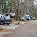 RVs and cars camping in Camp Area 2.- Sam Houston Jones State Park Campground