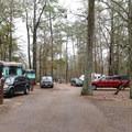 Camp Area 2.- Sam Houston Jones State Park Campground