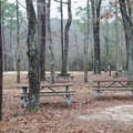 Tent-friendly sites at Camp Area 1.- Sam Houston Jones State Park Campground