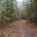 The trail is wide and generally flat, making it an easy and enjoyable walk.- Riverwalk Trail