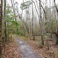 The wide easy trail is clearly marked within the forest.- Riverwalk Trail