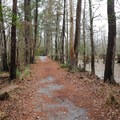 A portion of trail between the river and the swamp.- Riverwalk Trail