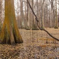 Vines cling to the trees out above the lake. - Louisiana State Arboretum Preservation Area