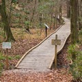 One of the many boardwalks in the arboretum trail system. - Louisiana State Arboretum Preservation Area