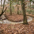 Creeks twist and bend their way around the state park. - Louisiana State Arboretum Preservation Area