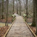 A boardwalk takes users deeper into pristine nature. - Louisiana State Arboretum Preservation Area
