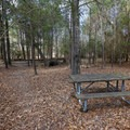 Fontainebleau offers unimproved campsites that are suitable for tent camping in a scenic and lightly-traveled back loop of the campground.- Fontainebleau State Park Campground