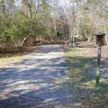 An unimproved camp site suitable for tent camping.- Fontainebleau State Park Campground