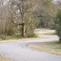 The winding path passes through medium density brush full of songbirds.- Blue Goose Nature Trail