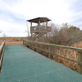 An observation deck at the far end of the trails provides a good destination.- White Lake Wetlands Conservation Area Birding + Nature Trail